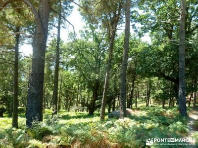 Pinares Angostura, Piedralaves; viajes culturales desde madrid;caminatas madrid;viajes en agosto